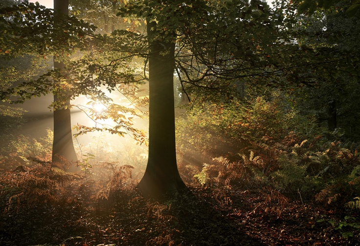 Autumn #3 2007 Norfolk England  by Tim Simmons