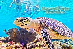 Trip advisor Cozumel Cruise -lowest price things to do in Cozumel for best prices! Cozumel tripadvisor reviews for the best things to do Cozumel mexico