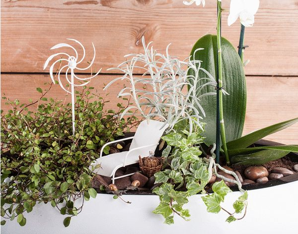 Image result for Discover How To Create A Miniature Garden