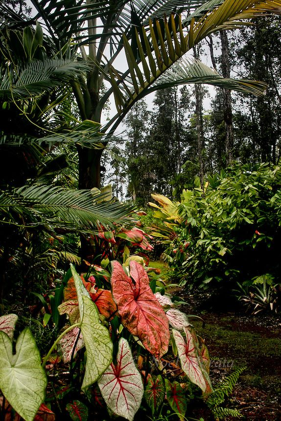 11697 best exotic plants images on pinterest exotic for Unusual trees for small gardens