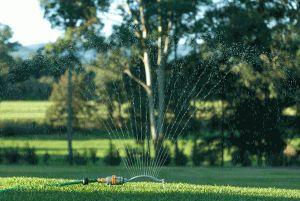 sprinkler - http://www.buffaloturf.com.au.