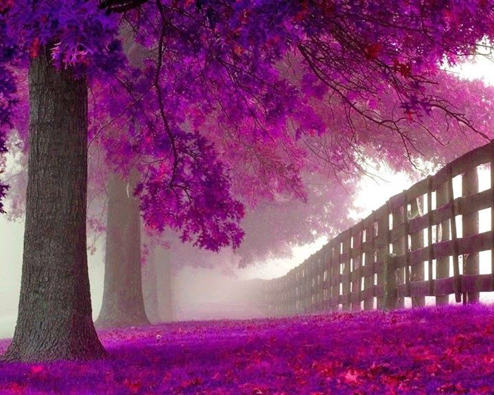 Dat Nature: Beautiful Purple Forest Hidden Road