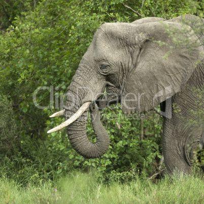голова слона скульптура сбоку: 5 тыс изображений найдено в Яндекс.Картинках