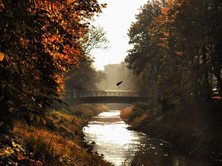 Liście lecą z drzew, liście lecą z drzew... #ZłotaGliwickaJesień niech trwa! Emotikon smile Emotikon smile fot. A. Skwarek