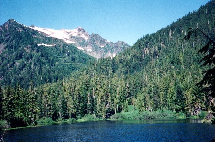 Olympic National Park - No. Fork Quinault Trail: Olympic National Parks, Olympics National Parks
