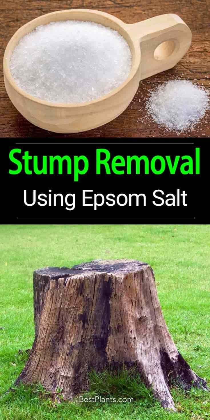 Using Epsom Salt Formula For Stump Removal Stump Removal