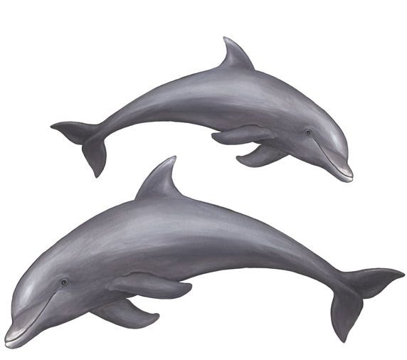 Set 2 Playful Dolphins 2 Peel and Stick Wall Decal - Wall Sticker Outlet