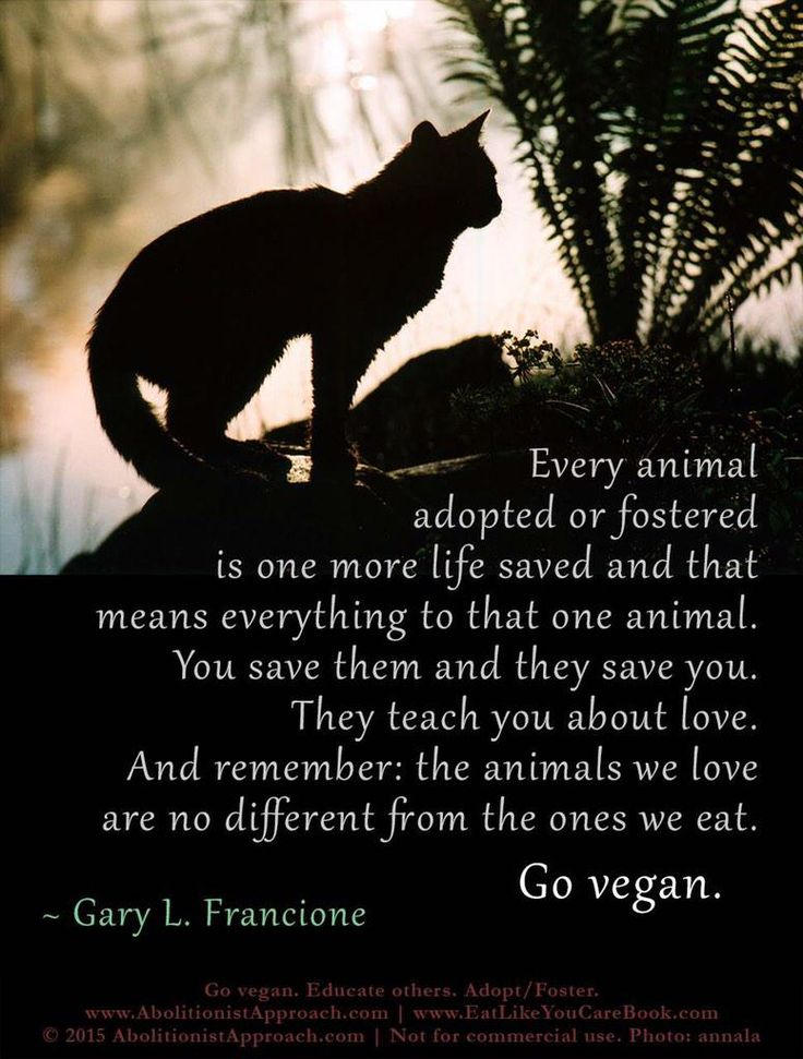 remember the animals we love are no different from the ones we eat, don't eat animals, go #vegan