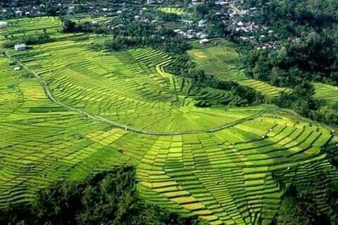 The unique rice field in manggarai flores. www.exotickomodotours.com