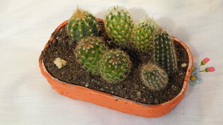 Il cestino di piccoli frutti Sant'Orsola diventa un vaso per cactus!  Scoprite come farlo qui: http://youtu.be/H4Hb2AcYVFg