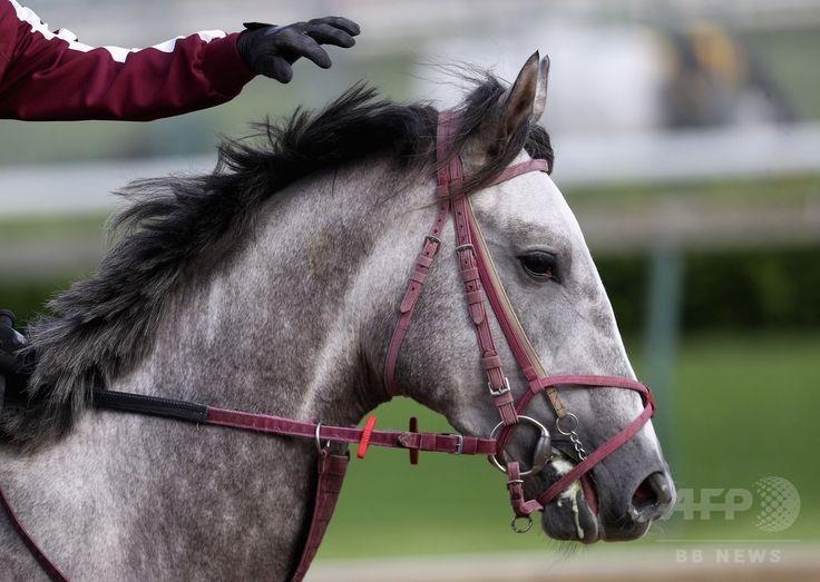 第142回ケンタッキーダービーを控え、ケンタッキー州ルイビルのチャーチルダウンズ競馬場で調教を受けるラニ(2016年5月5日撮影)