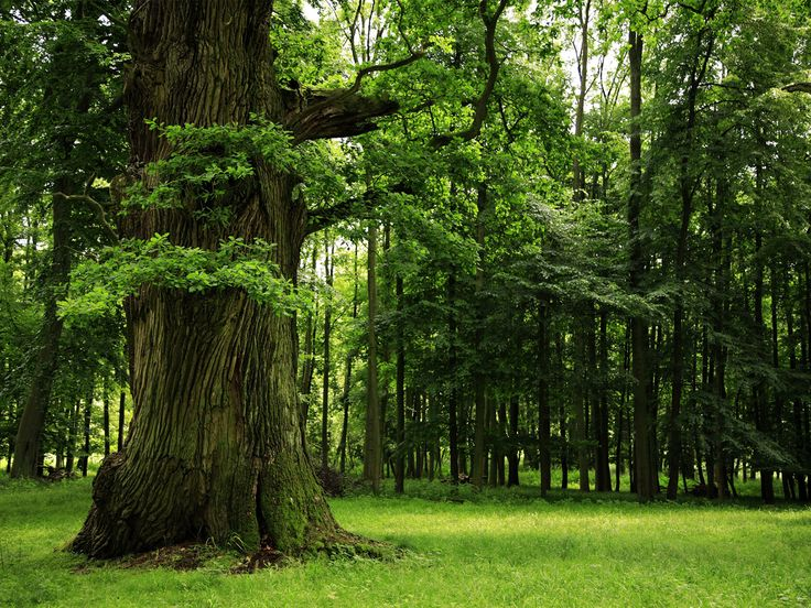 53 Best Trees Images On Pinterest Trees Fall And Forests