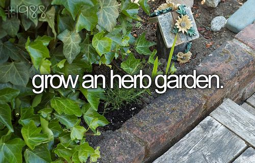 cute little herb garden