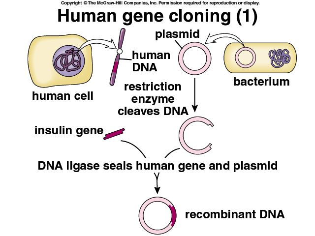 an analysis of genetic cloning and engineering Cloning and genetic engineering of horses will it affect future olympics from the editor jan 24, 2018 following is a link to an article i received that i thought was very interesting and thought provoking.