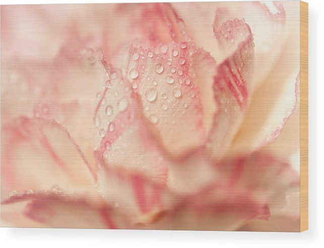 Morning Freshness. Natural Watercolor. Touch Of Japanese Style Wood Print by Jenny Rainbow.  All wood prints are professionally printed, packaged, and shipped within 3 - 4 business days and delivered ready-to-hang on your wall. Choose from multiple sizes and mounting options.  Acrylic, metal, wood, framed prints and canvas available in different sizes.  #JennyRainbowFineArtPhotography #FloralArt #HomeDecor #FlowerMacro