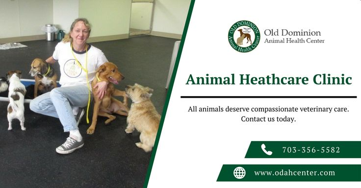 Old Dominion Vet >> Old Dominion Animal Health Center Is A Full Service Animal