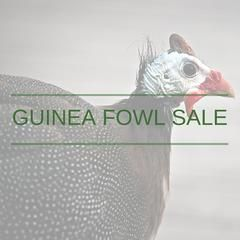 2017 Guinea Fowl are for sale now!