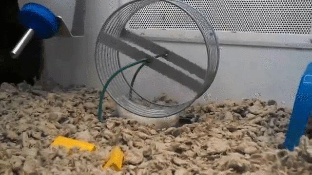Ленивый хомяк