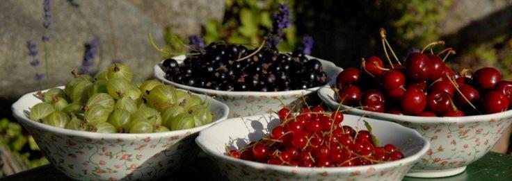Frugtbuske - Home & Garden