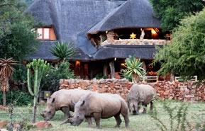 safari vacation website