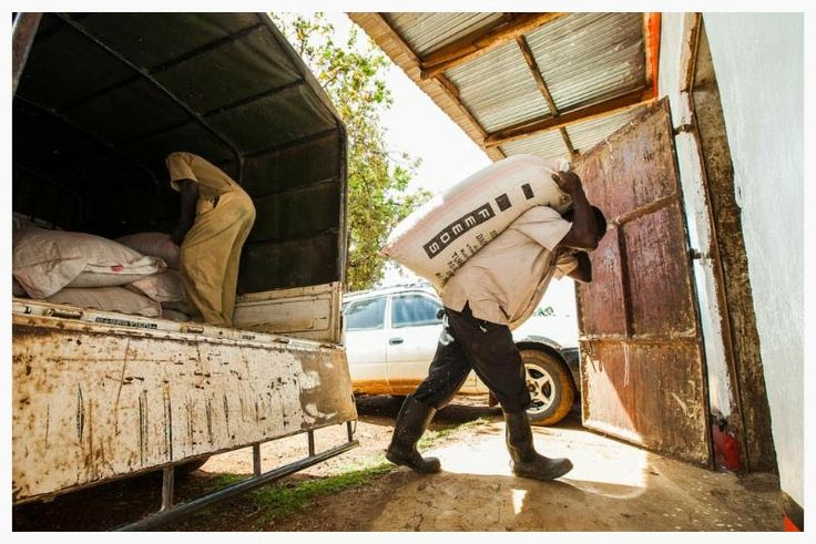 An agrodealer unloads feed from a truck in Kenya. Feed the Future helps small agribusinesses improve efficiency and increase profitability. ...