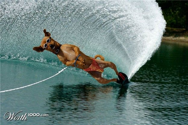 Water Ski, Water Sky, Ski Dogs, Funny Things, Dogs Day, Funny Pictures ...