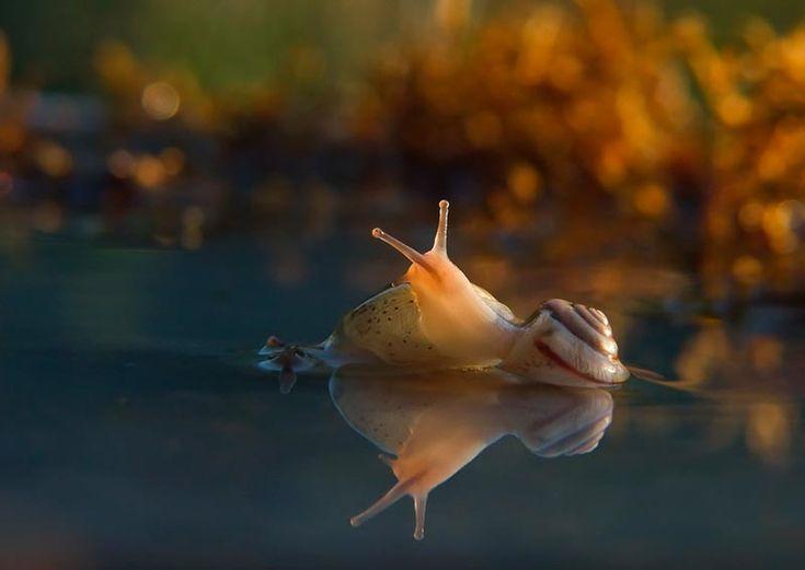 Il magico mondo di una lumaca