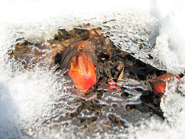 Cold climate gardening blog