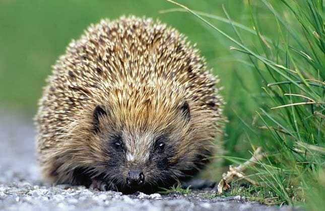 Save a species. Credit: Wildstock Salvar especies en peligro desde los jardines. Los británicos trabajan la biodiversidad desde el jardín privado, no sólo en los parques naturales