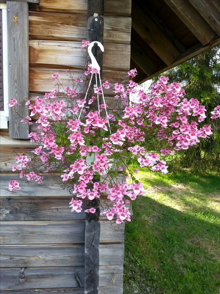 ...ja toiselle nurkalle lällasen kukkasen jonka nimeä en tiiä.