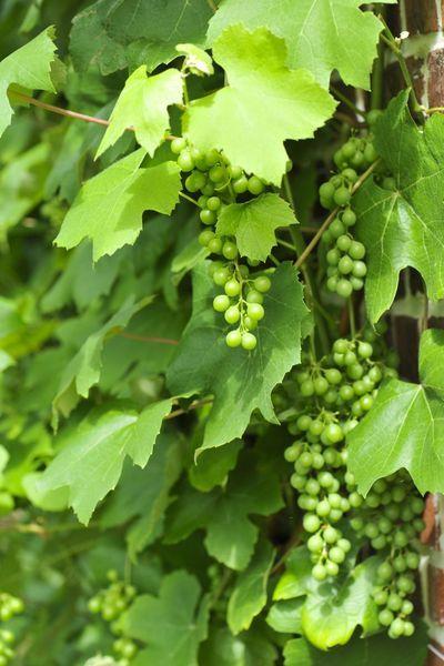 Graag fruit in de tuin, maar weinig plaats? Dan zijn fruitige klimmers de oplossing. Meer dan een klimplant met lekkere vruchten, een muur of een pergola op een beschut plekje en een flinke portie zon heb je niet nodig. Ga aan de slag met onze ...