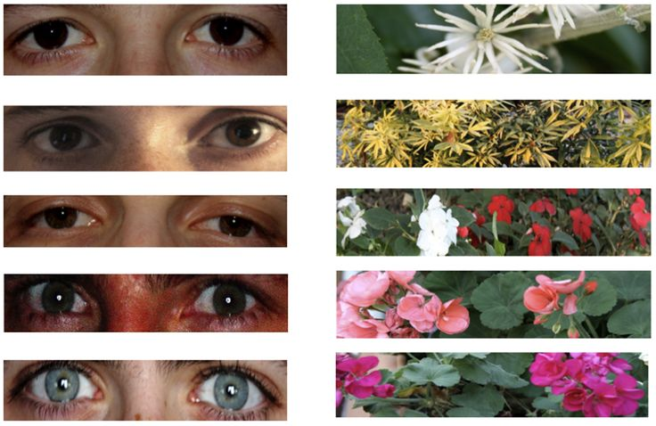 Why keeping eyes on litter promotes better behavior by Phillip Ball. BBC: Damien Francey et al. found that pasting an image of eyes below an symbol for trash disposal resulted in more 'good behavior' than images of flowers.  http://www.bbc.com/future/story/20120525-keeping-eyes-on-litter/2  http://www.plosone.org/article/info%3Adoi%2F10.1371%2Fjournal.pone.0037397 #Human_Behavior #Psychology #Damien_Francey #Philip_Ball #BBC #Environment: Flower, Eye