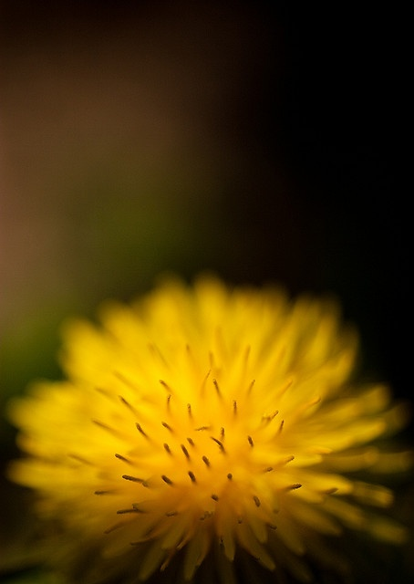 yellow flame by .vpeter, via Flickr