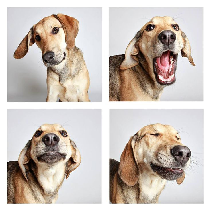 humane society of utah takes snapshots of adoptable dogs in a photo booth