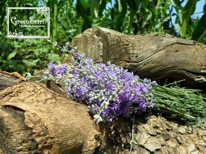 Lavender fresh bouquet