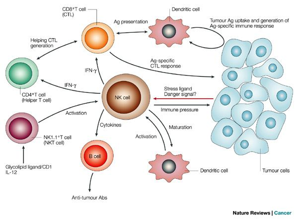 cancer immune system and damaged cells The lymphatic system and cancer the fluid then collects waste products, bacteria, and damaged cells it also collects any cancer cells if these are present for information about how cancer can affect the immune system.