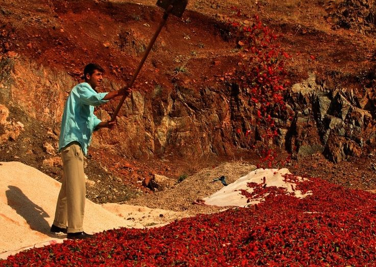 Kilis Pepper Producer Turkey