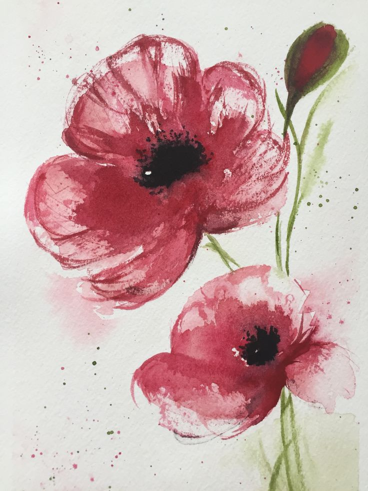 Poppies, watercolors