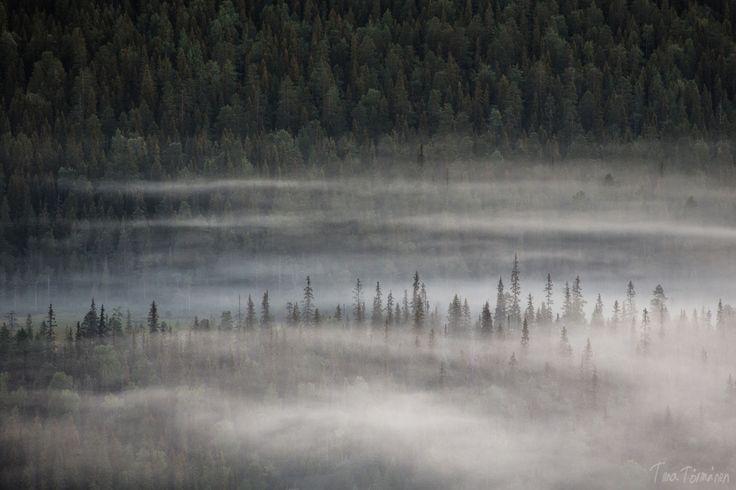 tiinatormanenphotography:   Trees.  Aug 2015,... - HIRAETH
