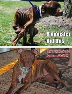 stop animal abuse. pit bulls are clearly not the monsters