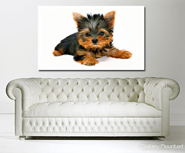 Yorkshire Terrier Puppy http://www.the-canvas-art-shop.co.uk/products/YORKSHIRE-TERRIER-PUPPY-664126.aspx