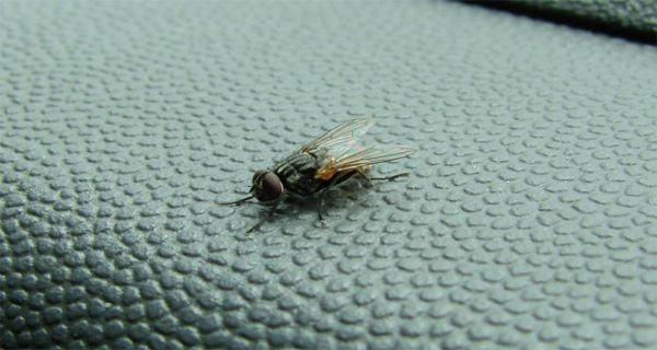 Incredibly simple trick to get rid of annoying flies