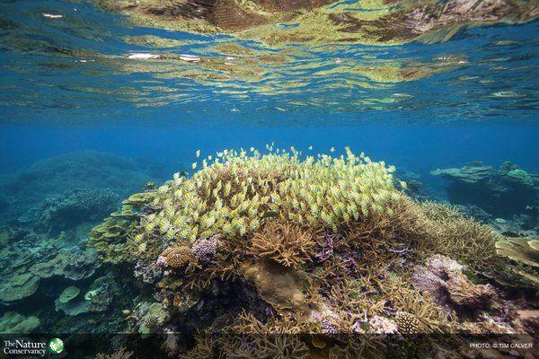 the pristine marine wilderness of Palmyra Atoll   MPAtlas (@MPAtlas)   Twitter