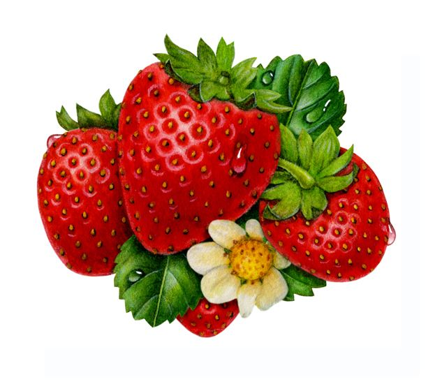 Strawberry group illustration by Judy Unger - lovely!!