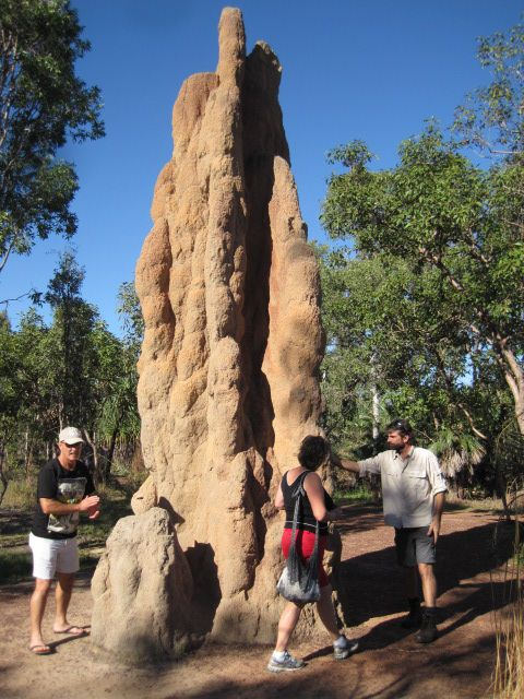 Cathedral Termite Mounds