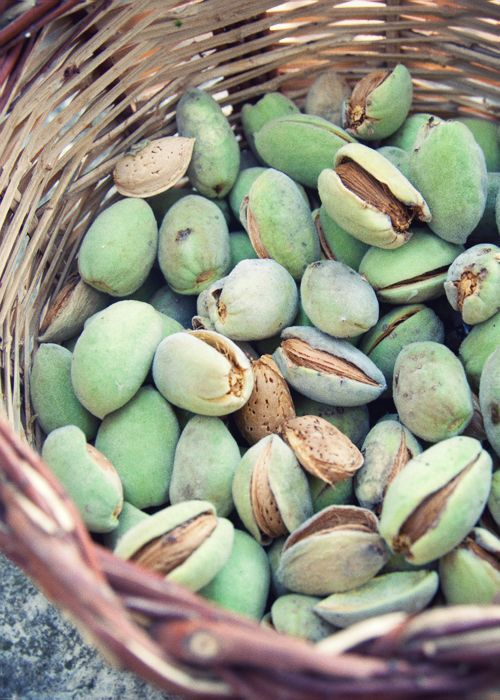pick fresh almonds in my grandmother's garden (and make Latte di Mandorle following this recipe afterwords)