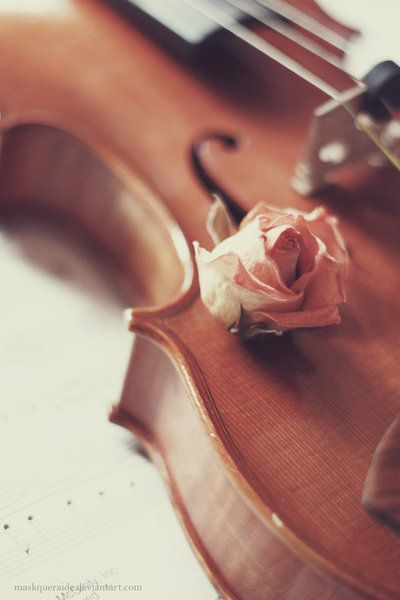 A pinner said, A violin is like a rose, both are treasured... Love it.