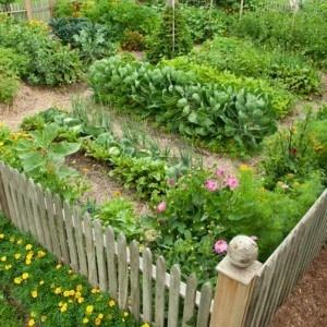 Ve able Garden