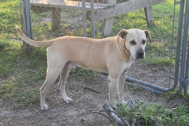 Adopt Buddy On Panama City Panama Pet Adoption Pets
