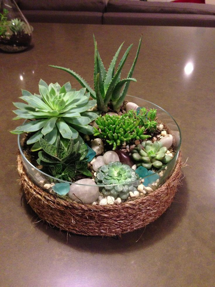 Succulent Garden, Twine Wrapped To Hide The Dirt Layer #succulents #diy